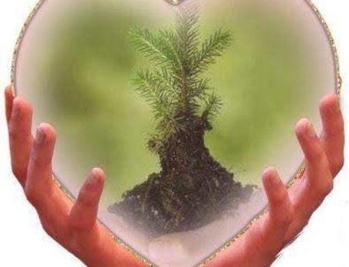 """WOWALPS  e l'iniziativa """"cresci un albero in val di Fiemme"""""""